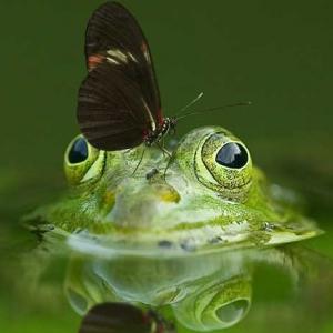 1_frog-540812_1920
